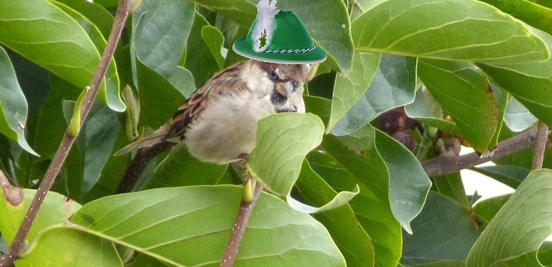 Petits oiseaux  2210