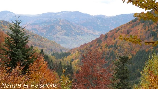 Présentation photos concours d'octobre H11