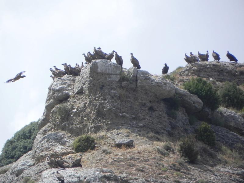 Reco Pyrénées Espagnoles Juillet 2016 Dscn2612