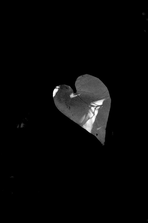 coeur solitaire N/B Dsc_9216