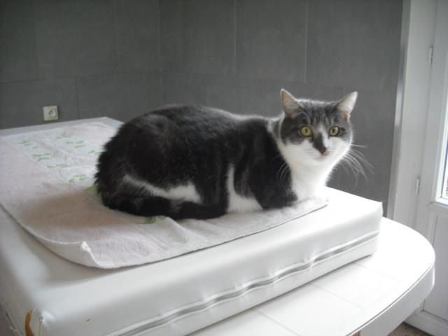 Victoire, chatte grise et blanche, née fin 2013 - Page 5 Dscf7110