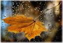 .. Осенние ОТКРЫТКИ 432513