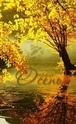.. Осенние ОТКРЫТКИ 98fad311