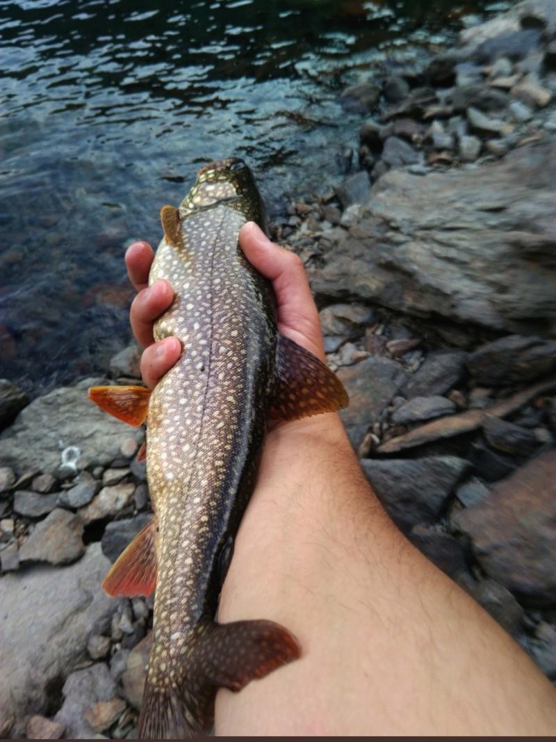Votre pêche salmo de septembre  Img_2010