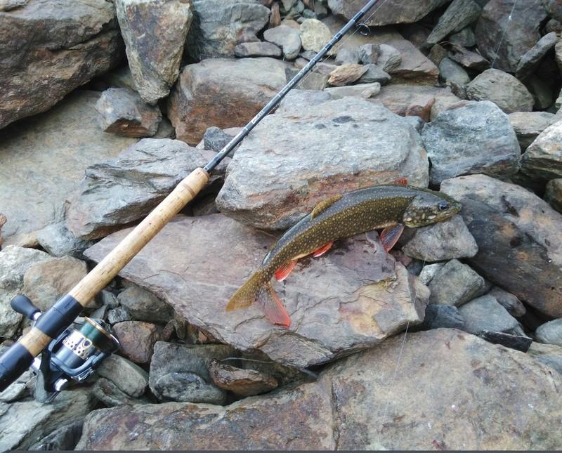 Votre pêche salmo de septembre  Img_2011