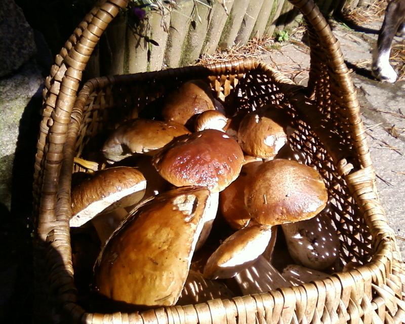 4X4, quad et champignon Photos32