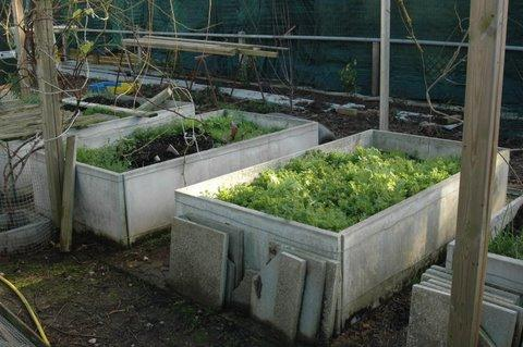 travailler un jardinet  à 0,50 mêtre du sol . Sapins10