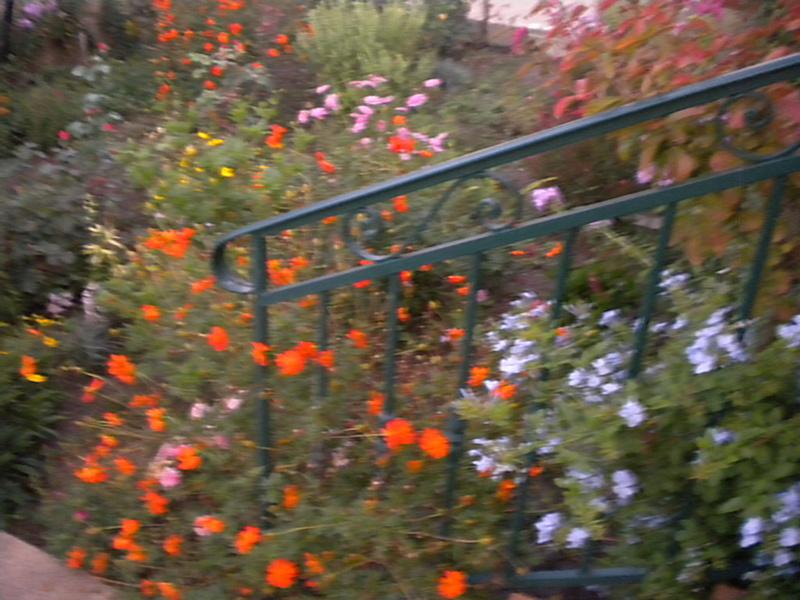 Le jardin, refuge de Marsouine - Page 38 Dscn7215