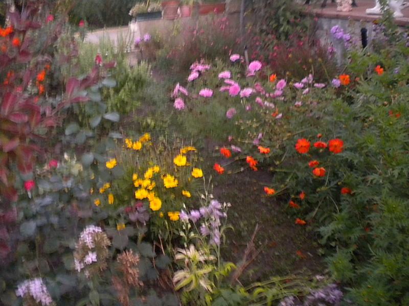 Le jardin, refuge de Marsouine - Page 38 Dscn7218