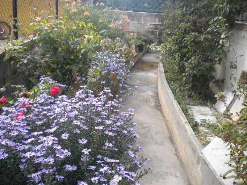 Le jardin, refuge de Marsouine - Page 40 Dscn7225