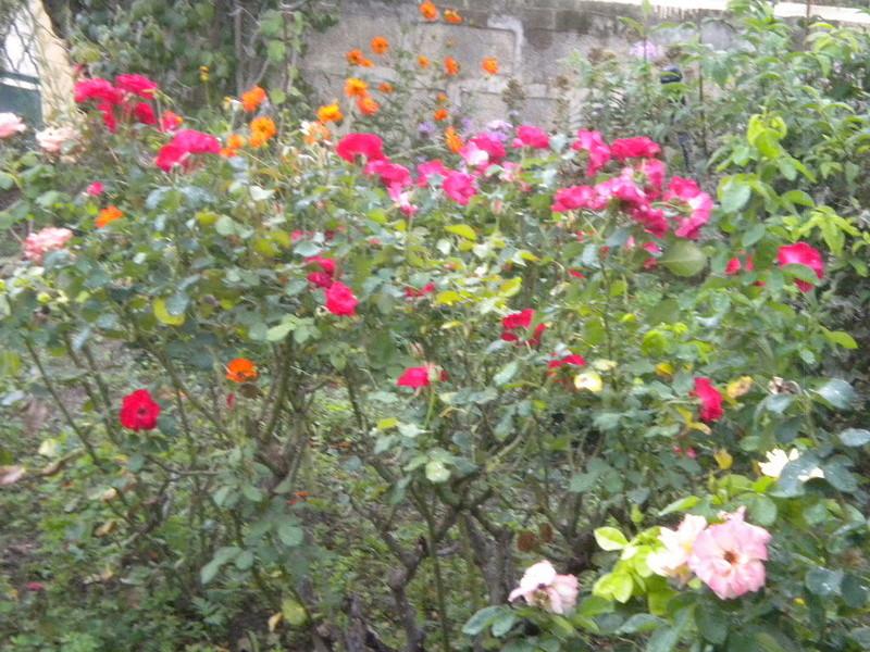 Le jardin, refuge de Marsouine - Page 40 Dscn7226
