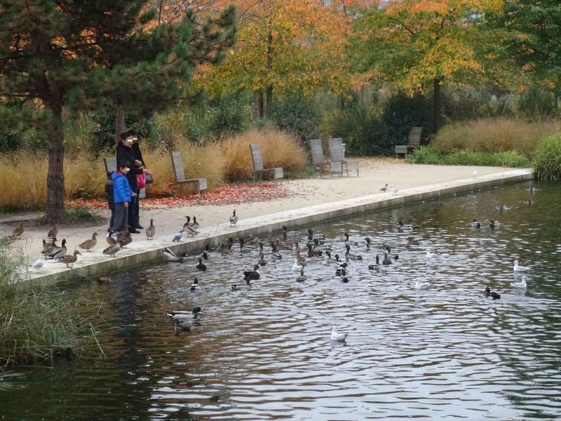 Hérons du Parc de Billancourt Dsc05746