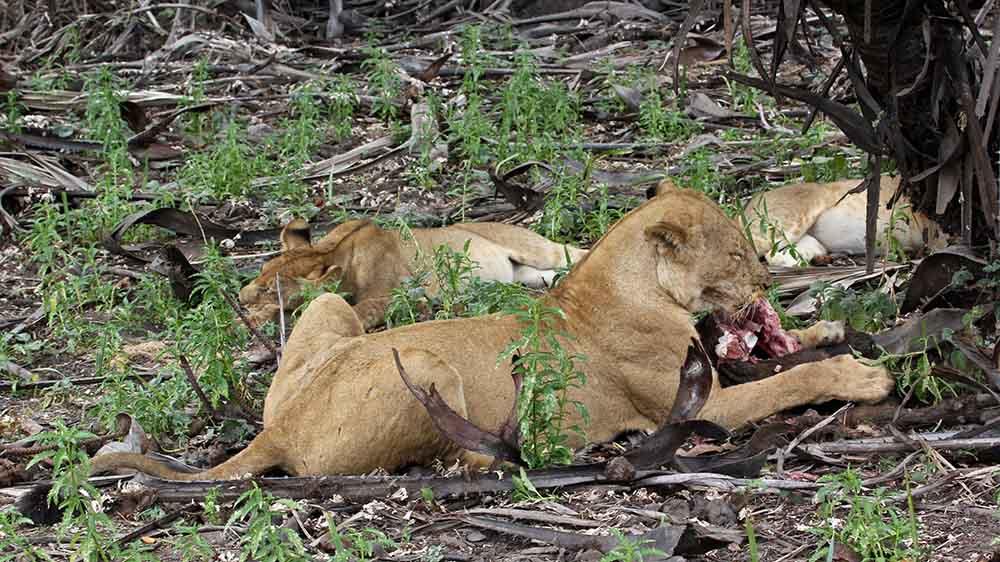 Vols de brousse en Tanzanie .     - Page 12 Img_5610