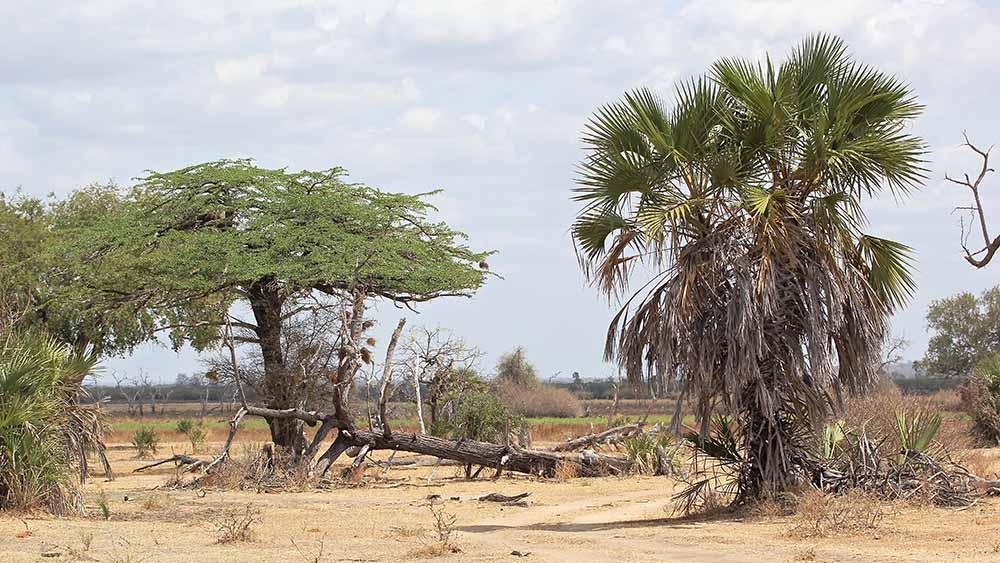 Vols de brousse en Tanzanie .     - Page 13 Img_5711