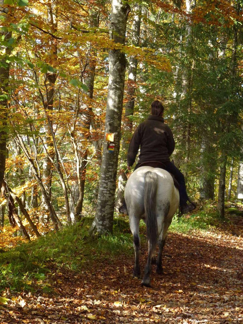 CONCOURS PHOTOS : le cheval et l'automne P1030510
