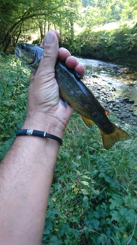 Votre pêche salmo de septembre  Dsc_1324