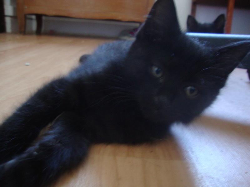 mowgli né le 1 er juillet 2016  Dsc06021