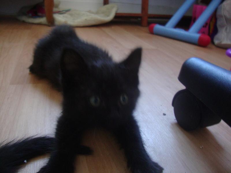 mowgli né le 1 er juillet 2016  Dsc06022