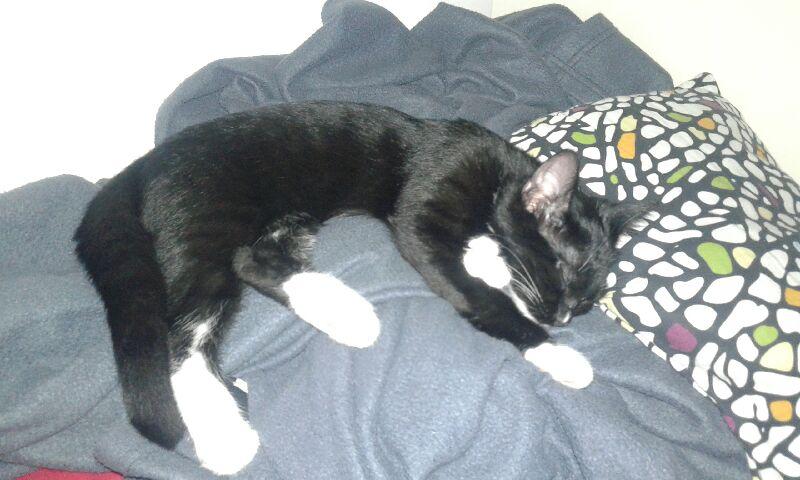 SOQUETTE, adorable chatonne de deux mois noire avec chaussons blancs - Page 3 20160810