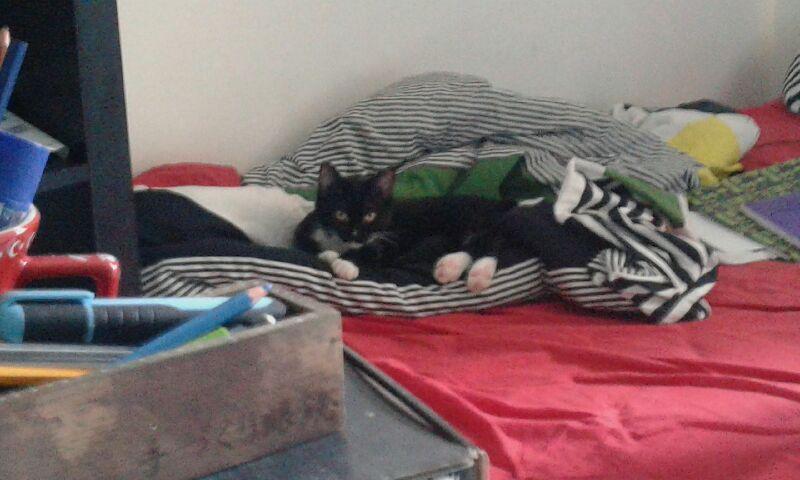 SOQUETTE, adorable chatonne de deux mois noire avec chaussons blancs - Page 3 20161010
