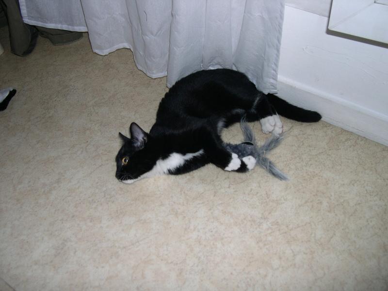 SOQUETTE, adorable chatonne de deux mois noire avec chaussons blancs - Page 3 Dscn7114