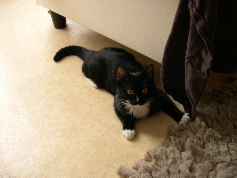 SOQUETTE, adorable chatonne de deux mois noire avec chaussons blancs - Page 3 Dscn7116