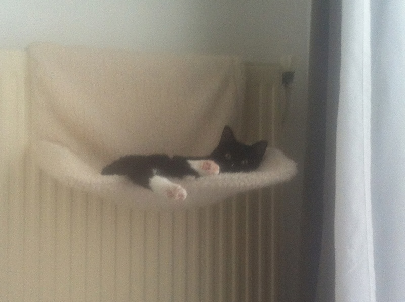 SOQUETTE, adorable chatonne de deux mois noire avec chaussons blancs - Page 3 Img_3110