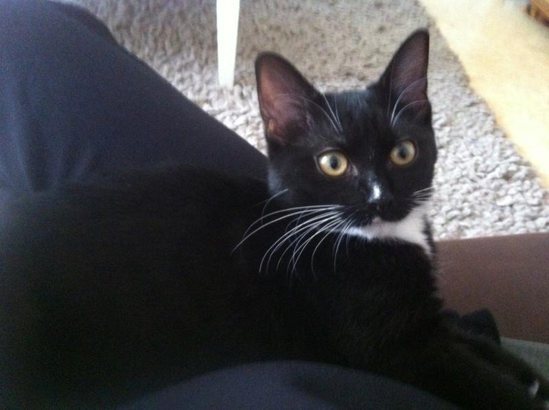 SOQUETTE, adorable chatonne de deux mois noire avec chaussons blancs - Page 3 Img_7710