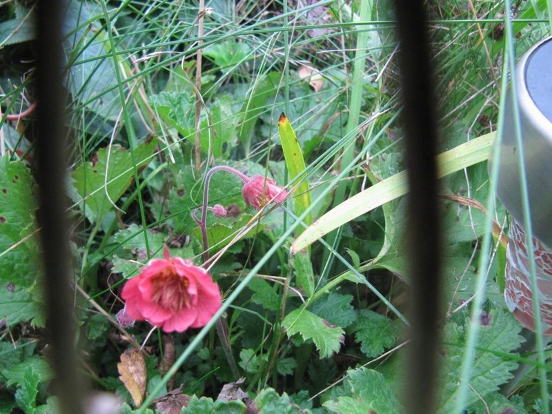 Floraisons du mois de septembre - Page 11 00911
