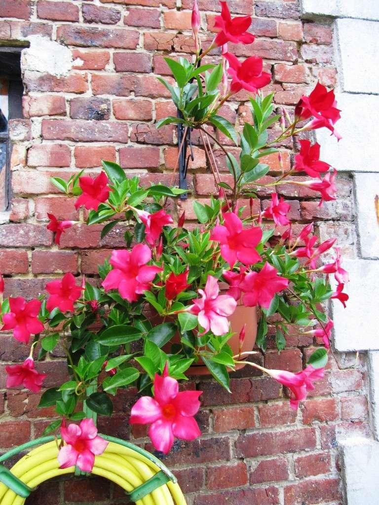 Floraisons du mois de septembre - Page 11 01510