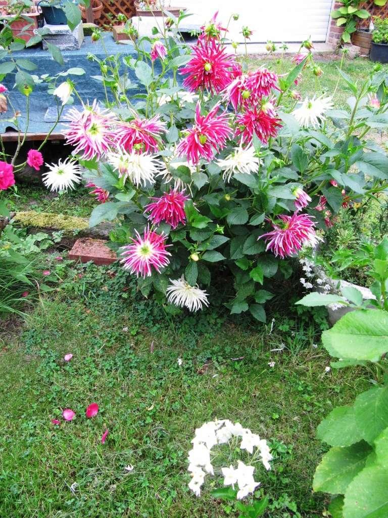 Floraisons du mois de septembre - Page 11 02210