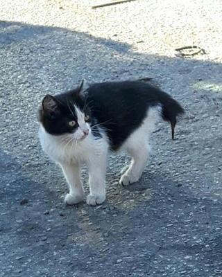 Chaton femelle, 3/4 mois, Var  Chat_q10
