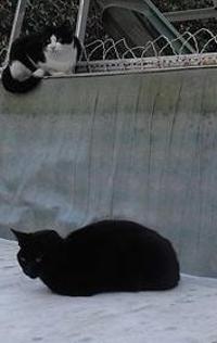 2 chats, 6 mois, mâle et femelle, Var Nelson10
