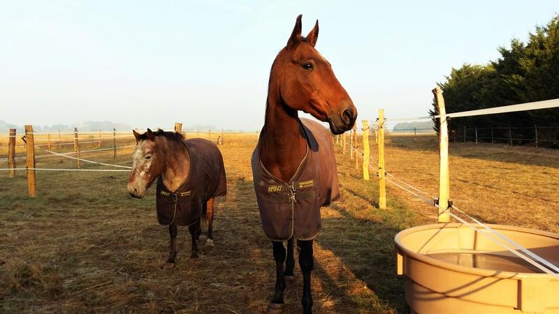 INDIANA - OI type poney née en 1994 - adoptée en juillet 2016 par Adeline 20161010