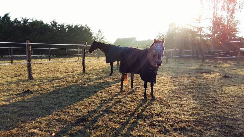INDIANA - OI type poney née en 1994 - adoptée en juillet 2016 par Adeline 20161011