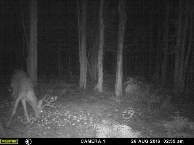 mes premiere photo de deer 2016 Mfdc8510