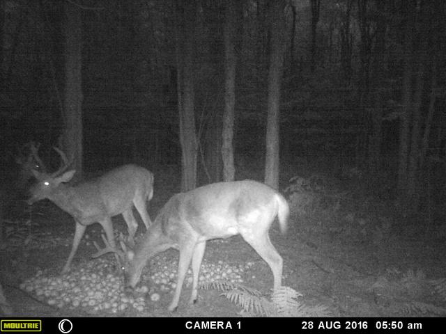 mes premiere photo de deer 2016 Mfdc8514