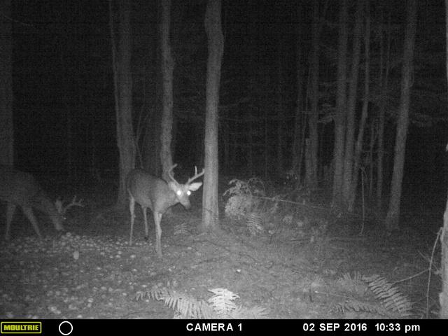 mes premiere photo de deer 2016 Mfdc8611