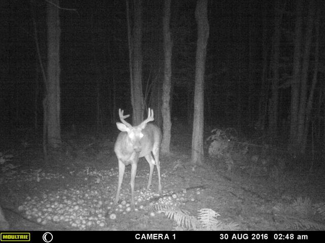 mes premiere photo de deer 2016 Mfdc8612