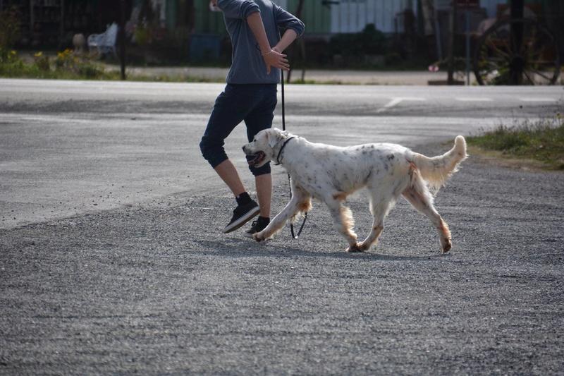 MONZON chien croisé dogue /retriever 6 ans -  Asso Orfee en pension dept 79 Monzon17