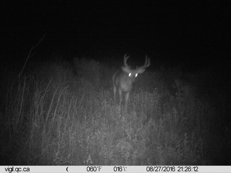 chasse au cerf ou orignal Imag0110