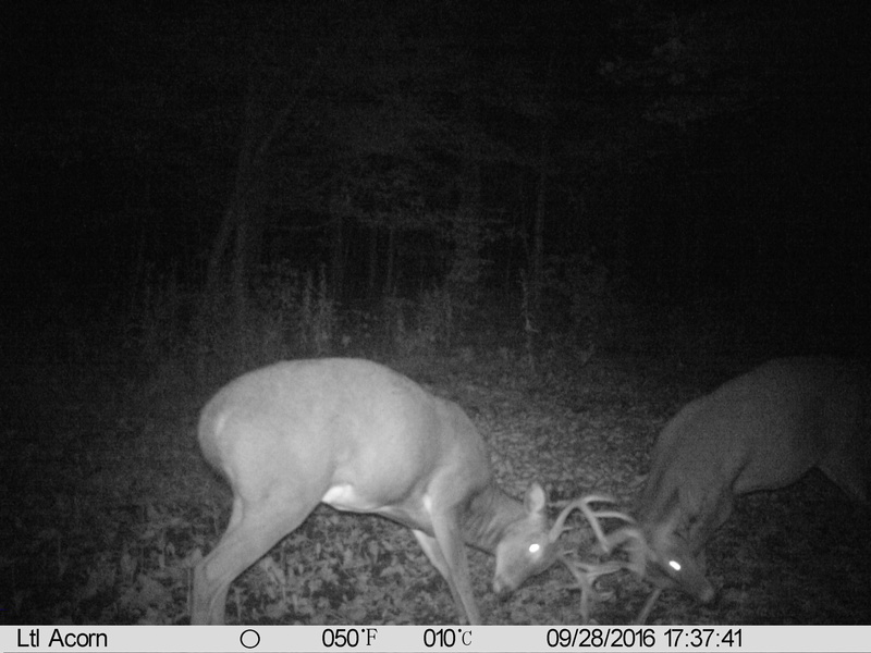 chasse au cerf ou orignal Imag0510