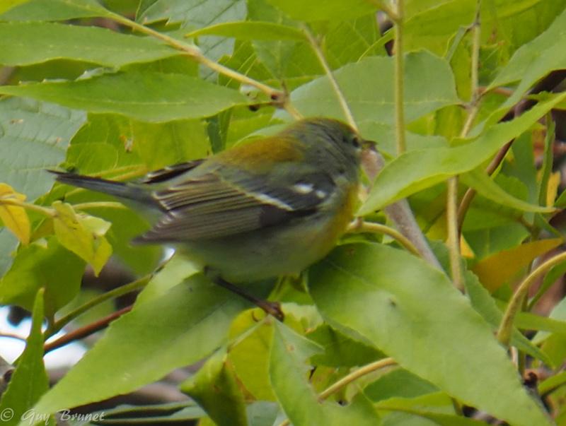 Deux oiseaux à identifier s.v.p. Pa010010