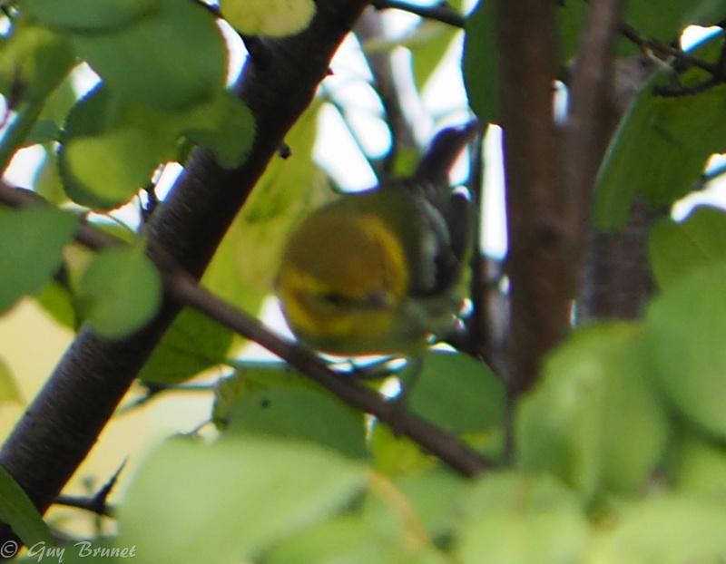 Deux oiseaux à identifier s.v.p. Pa010011