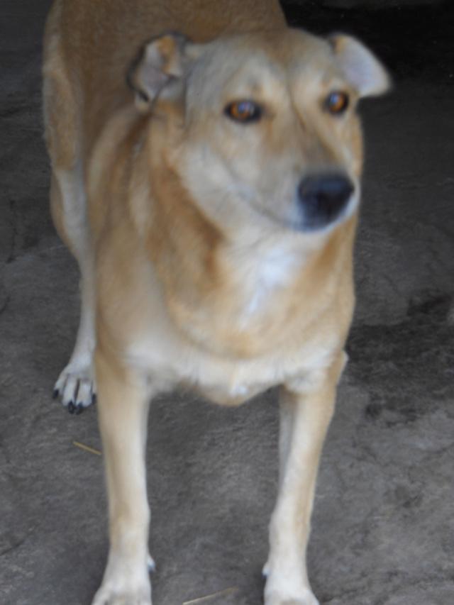 BAILEYS, née en 2011, sauvée de l'équarrissage - parrainée par Nathalie -SOS-R-SC - Page 2 Bailey13