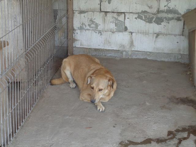BAILEYS, née en 2011, sauvée de l'équarrissage - parrainée par Nathalie -SOS-R-SC - Page 2 Ro_bai10