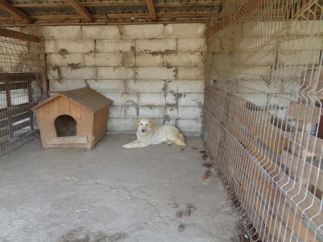 BALANUCH, mâle croisé berger sauvé de Pallady, né en 2009 parrainé par Nathalie G. -Gage Coeur  Myri_Bonnie-SC-R-SOS- Ro_bal10