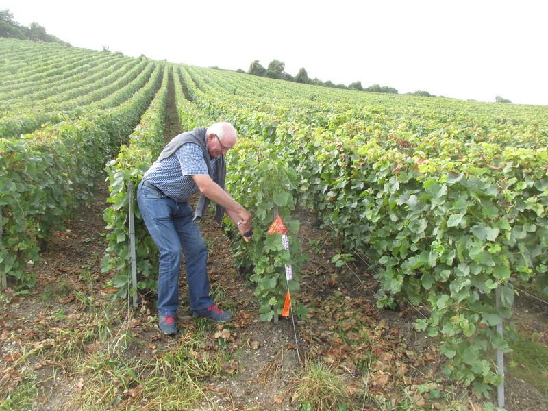 Vendanges en Champagne (51) Verdun22