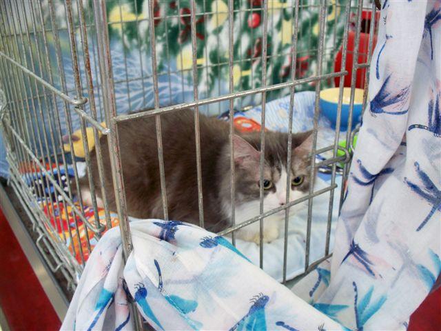 Samedi 29 octobre 2016 - Journée adoption - Magasin Vert - BETTON (35) 101_0229