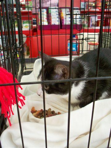 Samedi 29 octobre 2016 - Journée adoption - Magasin Vert - BETTON (35) 101_0232